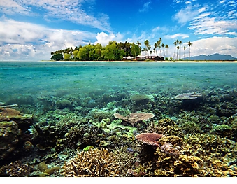 Коралловый риф у острова (Каталог номер: 05139)