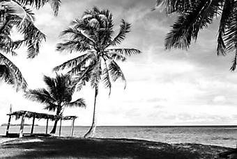Тропически пляж. Черно-белое (Каталог номер: 05151)