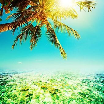 Морской пейзаж (Каталог номер: 05152)