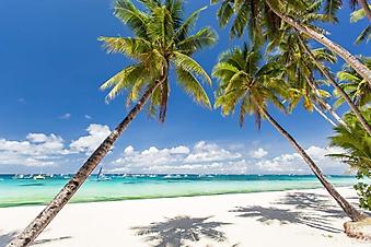 Тени на белом песке (Каталог номер: 05159)
