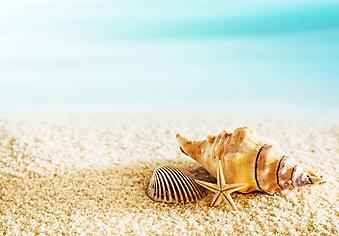 Ракушки на золотом песке (Каталог номер: 05166)